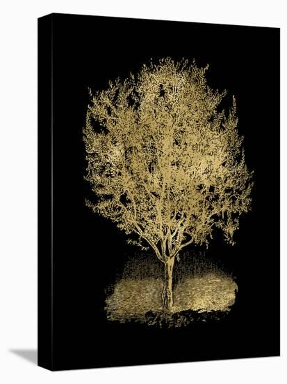 Olive Tree Golden Black-Amy Brinkman-Stretched Canvas Print
