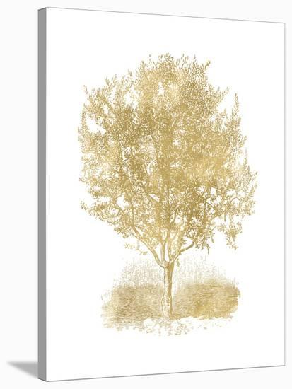 Olive Tree Golden White-Amy Brinkman-Stretched Canvas Print