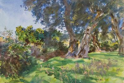 Olive Trees, Corfu-John Singer Sargent-Giclee Print