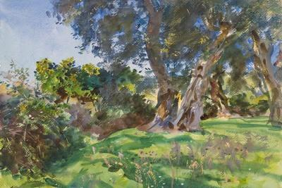 https://imgc.artprintimages.com/img/print/olive-trees-corfu_u-l-q110z740.jpg?p=0