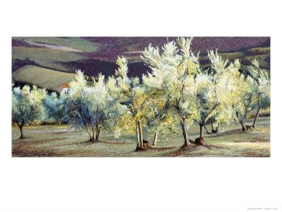 Olive Trees in the Evening-Helen J^ Vaughn-Giclee Print