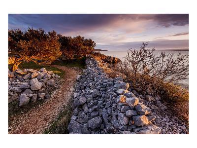 Olive Trees on the Beach, Island of Krk, Croatia--Art Print