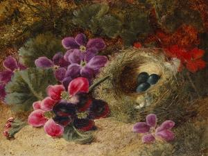 A Bird's Nest and Geraniums by Oliver Clare