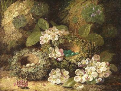 Primroses and Bird's Nests on a Mossy Bank, 1882