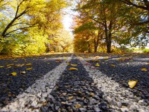 Autumn Leaves on Old Federal Highway by Oliver Strewe