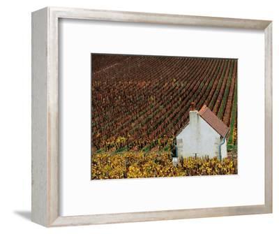 Autumn Vineyards and Farmhouse, Cote de Beaune, Beaune, Burgundy, France