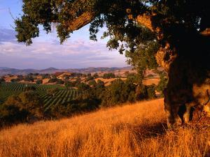 Firestone Vineyard in Background, Santa Ynez Valley, California by Oliver Strewe
