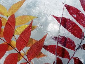 Frozen Leaves by Oliver Strewe