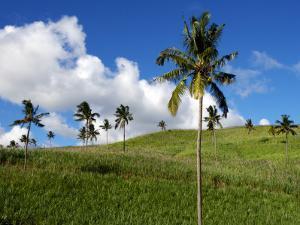 Sugar Cane Fields Baie Du Cap by Oliver Strewe