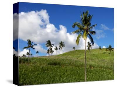 Sugar Cane Fields Baie Du Cap