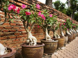 Wat Yaichaimongkhol by Oliver Strewe