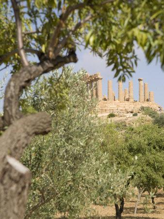 Olive and Almond Trees and the Temple of Juno, Valley of the Temples, Agrigento, Sicily, Italy