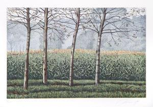 Birches and Corn Field by Oliviero Masi