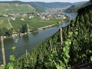 Vineyards on Slopes Above the Mosel River, Gravenburg, Germany, Europe by Oliviero Olivieri