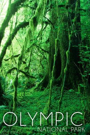 https://imgc.artprintimages.com/img/print/olympic-national-park-washington-rainforest_u-l-q1gqepw0.jpg?p=0