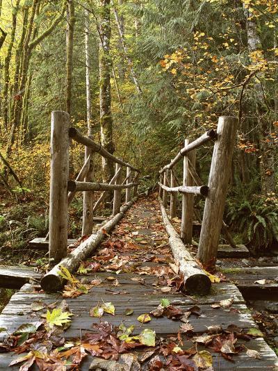 Olympic National Park, Washington, USA--Photographic Print