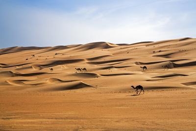 https://imgc.artprintimages.com/img/print/oman-wahiba-sands-camels-belonging-to-bedouins-cross-sand-dunes-in-wahiba-sands_u-l-q12rmuy0.jpg?p=0