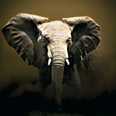 On Safari-Bobbie Goodrich-Art Print
