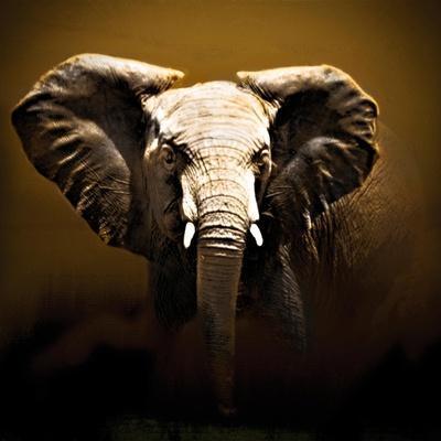 https://imgc.artprintimages.com/img/print/on-safari_u-l-pxkya70.jpg?p=0
