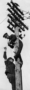 On Telegraph Pole
