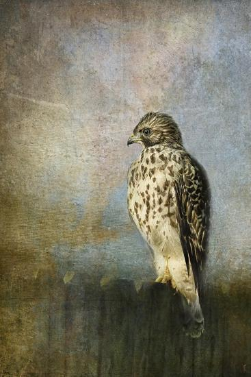 On the Fence Red Shouldered Hawk-Jai Johnson-Giclee Print