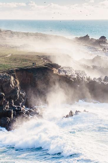 On the Misty Trail, Sonoma Coast, California State Parks-Vincent James-Photographic Print