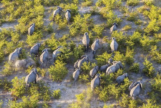 On the Move - Elephants--Giclee Print