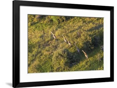 On the Move - Giraffe--Framed Giclee Print