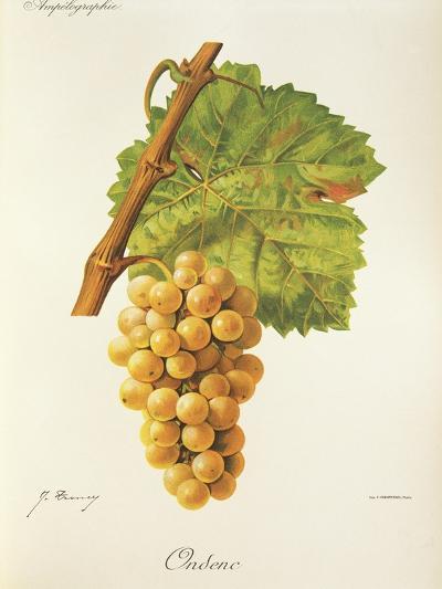 Ondenc Grape-J. Troncy-Giclee Print