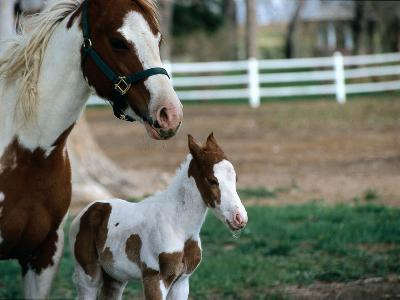 One Day Old Horse with Mother-Chris Rogers-Photographic Print