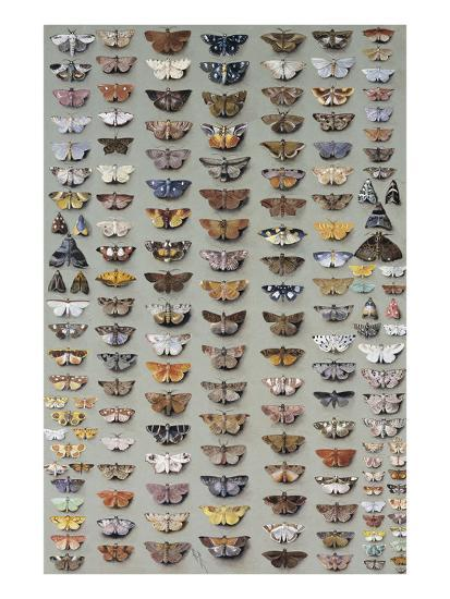 One Hundred and Sixty Six Moths Belonging to Several Families, But Mostly Noctuidae and Geometridae-Marian Ellis Rowan-Giclee Print