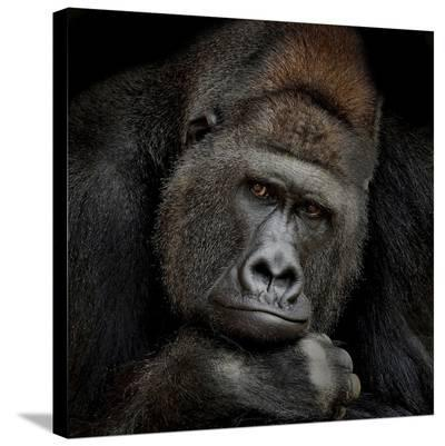 One Moment In Contact-Antje Wenner-Braun-Stretched Canvas Print