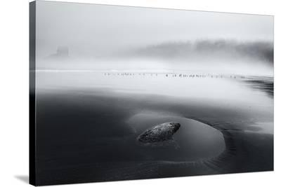 One Morning-Dani Bs^-Stretched Canvas Print