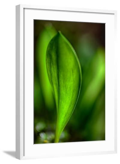 Only in Spring-Ursula Abresch-Framed Photographic Print