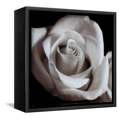 Open Rose--Framed Canvas Print