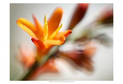 https://imgc.artprintimages.com/img/print/open-sunshine-i_u-l-f8m6cr0.jpg?p=0