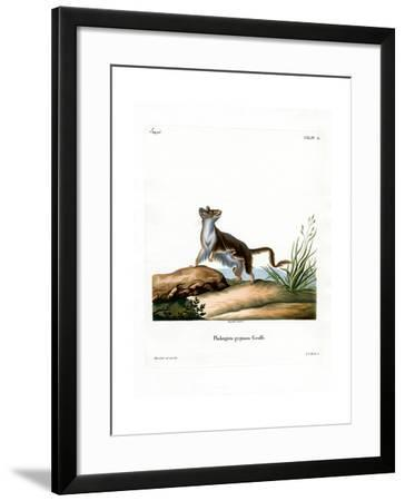 Opossum Mouse--Framed Giclee Print