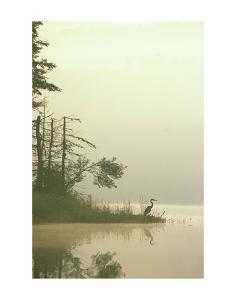 Lone Heron by Orah Moore