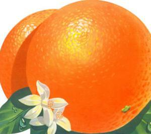 Orange Blossoms and Fruit