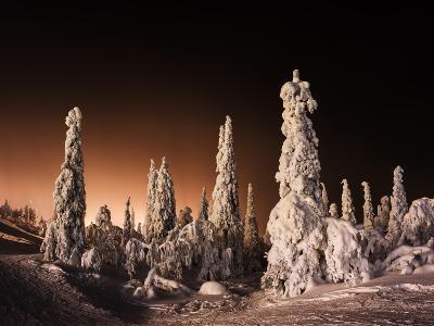 Orange Finnish Winter Forest-Nickolay Loginov-Photographic Print