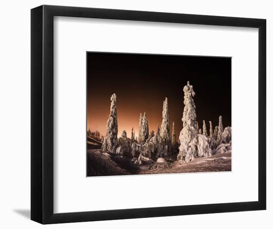 Orange Finnish Winter Forest-Nickolay Loginov-Framed Photographic Print