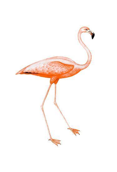 Orange Flamingo 2-Sheldon Lewis-Art Print