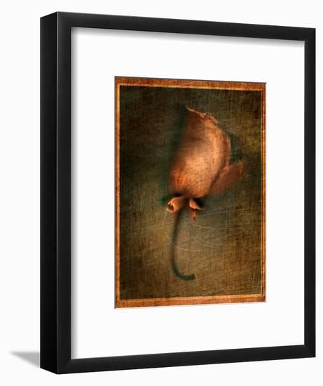 Orange Flower-Robert Cattan-Framed Photographic Print