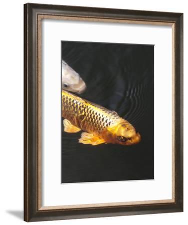 Orange Koi Fish Style-Wonderful Dream-Framed Art Print