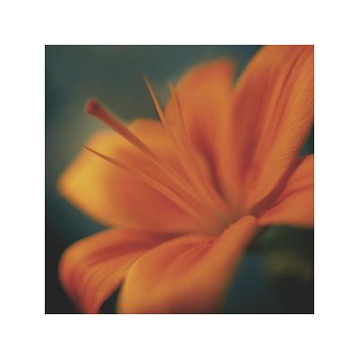 Orange on Turquoise-Jane Ann Butler-Giclee Print