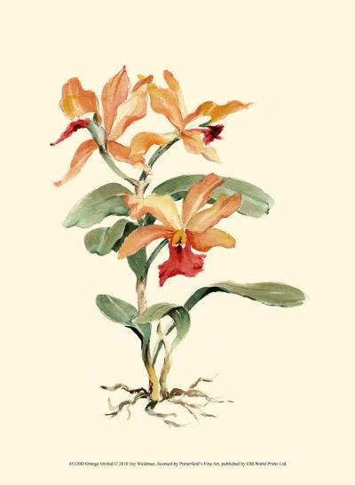Orange Orchid-Joy Waldman-Art Print