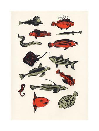 https://imgc.artprintimages.com/img/print/orange-plain-fish-2016_u-l-q105stk0.jpg?p=0