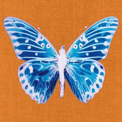 Orange Pop Butterfly-Christine Caldwell-Art Print