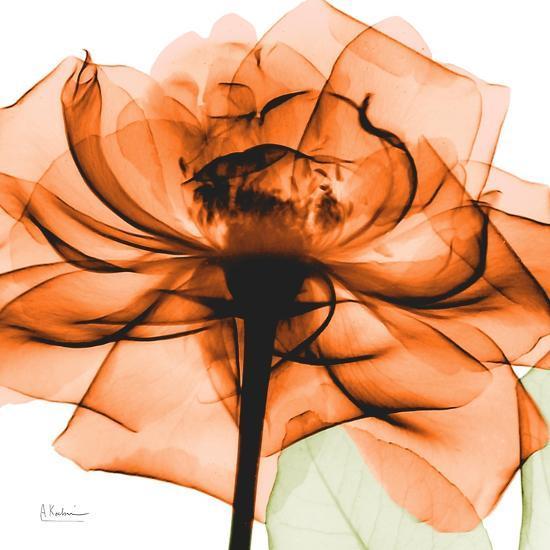 Orange Rose-Albert Koetsier-Art Print