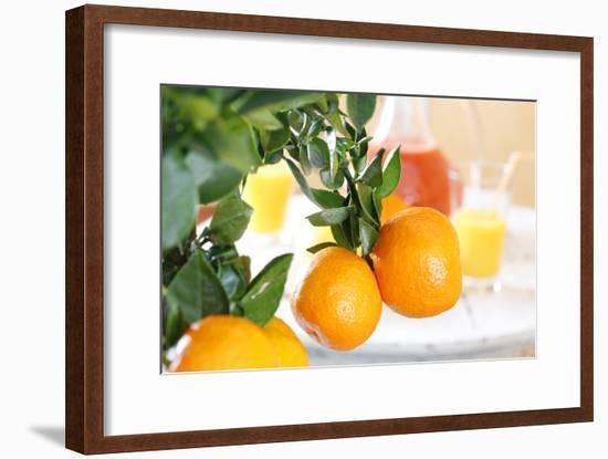 Orange Tree, Branch with Fruits, Citrus Mitis Calamondin-Sweet Ink-Framed Photographic Print